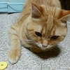 お片づけを手伝う猫