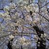 今月の唄『同期の桜』