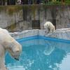 「札幌でしかできない50のこと」全部行ってみた。円山動物園②