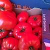 Les légumes au marché d'été dans la région de Bordeaux