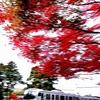 円覚寺の紅葉 Ⅲ