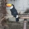 上野動物園に関する基本情報と行ってきた感想!所要時間やおすすめの動物も!