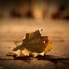 今週の気になったこと まとめ 2012年9月3日~9月8日