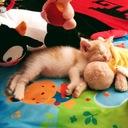 フランスで子育て猫育て。