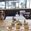 信州鹿肉とやさいのわんこクリスマスケーキ教室