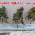 3種類の葉で比較!オランダフラワーで実感的な樹木を作る手順
