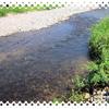なになに!?琵琶湖のアユが45年間で最悪の事態。