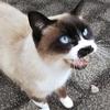 ◆山猫達(2017/12/11~13)