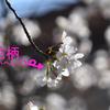 ※花柄(かへい)※