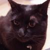 今日の黒猫モモ&白黒猫ナナの動画ー1021