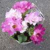また花を買ってしまいました