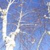 桜木紫乃を読む