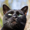 黒猫さん。