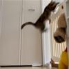 キッチンの扉を飛び越えられました…