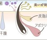 目の前に耳毛フサフサな方が!何故耳毛が生えるんだろう?その答えは・・・。