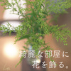 部屋を綺麗に片付けて、花を飾る。近頃の癒しの花「ソリダゴ」