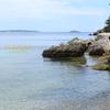 セントマルガリータ島③ 海藻のベッド Saint-marguerite island  Cannes