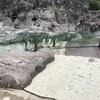 行かないと分からない!葛西臨海水族園の魅力