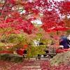 【永観堂】🍁秋はもみじの永観堂🍁は予想以上に混雑してエグかった件😱