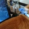 猫の問題行動の専門病院