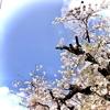 【4月】植物の話【新年度】