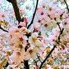 パラコート滲む造花とハーシュノイズ