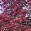 春の彼岸の墓参!暖かな日になった?花粉は相変わらず多い!