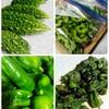 ep.96  最期の夏野菜たち