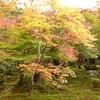 秋の京都(*´ω`*)