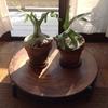 ワイルド系  観葉植物をご紹介しましょう!