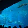 沖縄旅行③ 海洋博公園・沖縄美ら海水族館・エメラルドビーチ