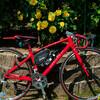 薔薇園にロードバイクで突入