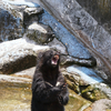 連休に岐阜ツキノワグマに餌をやれる「クマ牧場」にいってきた!~旅行記