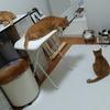 ブログお休み中の猫達の様子