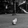 TOKYOSNAP写真~撮影NikonD90~