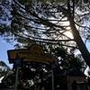 アメリカの公園、Palo Altoのマジカルブリッジが凄かった!