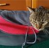 Amazonさんで買った斜め掛けの猫キャリーバックで動物病院に行ってきたよん by bycycle