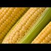 秋の味覚と人工知能 (2):機械学習でトウモロコシを守り、食料危機から96億人を救え