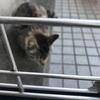 可愛い野良猫ちゃんが家にやってきたので仲良くなりたいにゃ!