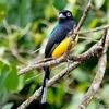 ベリーズ アルツンハ遺跡公園の野鳥たち