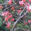 4月13日誕生日の花と花言葉