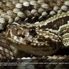 世界の毒蛇の世界