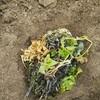 ~収穫後の葉っぱどうする?ゴミバケツで残渣堆肥の作り方~小さな庭の家庭菜園