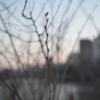 【人間関係】冬を耐え忍び、春に伸びゆく木枝に、自分を重ねる【ひとり写真部】