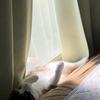 【愛猫日記】毎日アンヌさん#17
