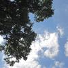上荻(杉並区)の「トトロの樹」を訪ねて/    巨きな〝木影〟を撮影したかったのだ…けれど