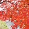 中央公園の紅葉