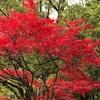 🍁紅葉シリーズ🍁鮮やかな紅葉の写真🍁撮れました📷📸新池公園🍁愛知・高蔵寺🍁
