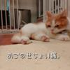 雨田甘夏、陣取りです。【猫と昼寝とポジション事情】