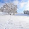 第348歩 雪の朝